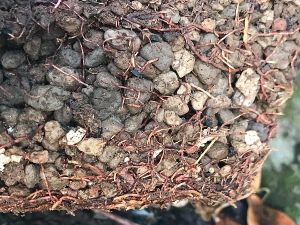 đá bọt phumic