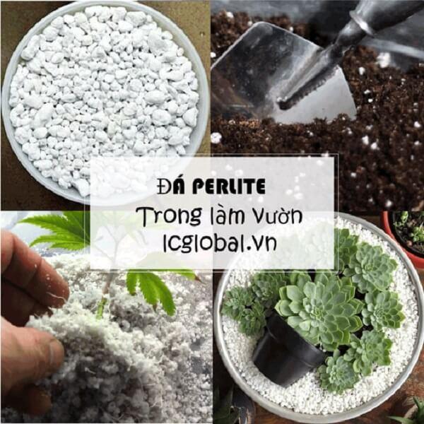 Ứng dụng đá Perlite trong làm vườn
