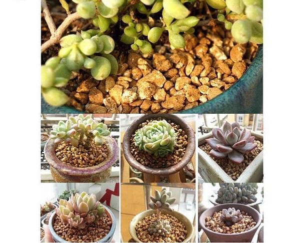 Đất trồng sen đá là thành phần không thể giúp cây phát triển tốt và khỏe mạnh