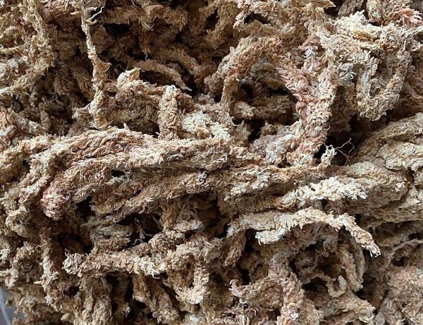 Dớn Chile có cấu trúc dạng sợi, được dùng làm giá thể trồng lan