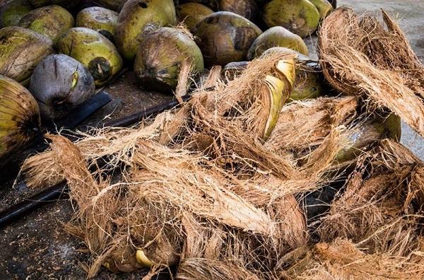 Giá thể trồng lan với xơ dừa giữ ẩm tốt