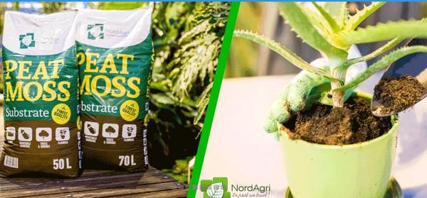 Cách sử dụng peat moss cho cây trồng
