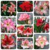 Hướng dẫn cách trồng lan huệ ra hoa đúng Tết đơn giản và đẹp