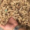 rêu sâu